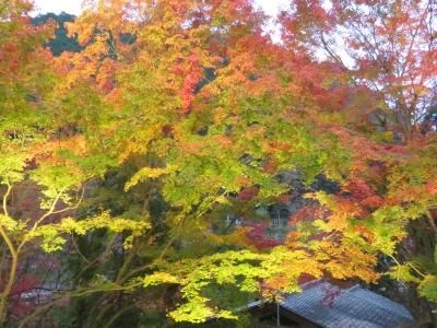 12_紅葉のライトアップ.JPG