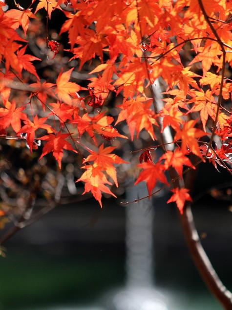 紅葉もラスト