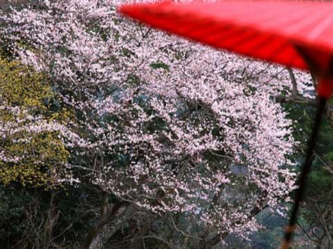 京都ってこんなイメージ