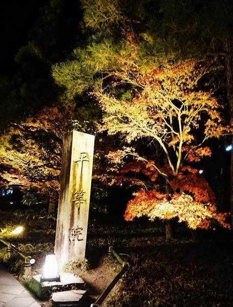 『平等院』 秋の紅葉ライトアップ