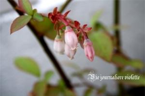 ブルーベリーのお花