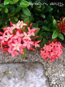 おきなわワールド内かわいいお花