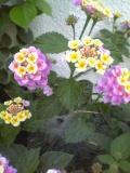 コンクリートの隙間に自生でしっかり花を咲かせている