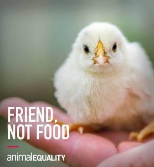 KFCがベジタリアン向けメニュー開発、来年にも英で販売!