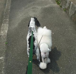 ハテナ散歩