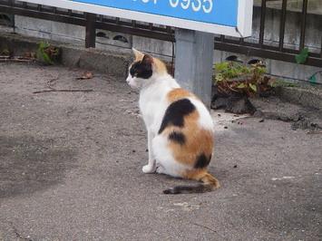 猫の背中・・・猫背