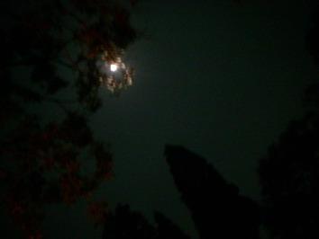 夜空ならこれくらい・・・でも・・・