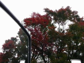 そろそろ秋の気配が・・・