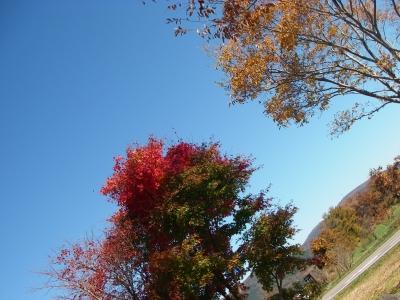 青空と木々が美しい^^