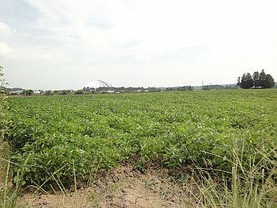 野村の田んぼっ