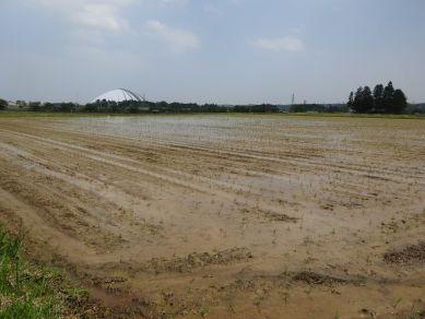 野村の田んぼ