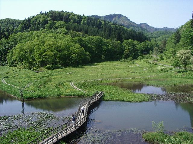 新緑のたきがしら湿原