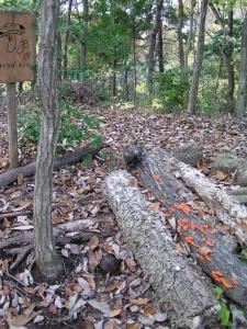 ほだ木に生えた赤いキノコ