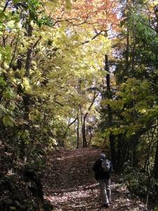 紅葉と木漏れ日の中を歩く