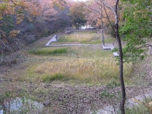 湿生生物観察園