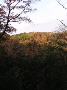 散策路・遠く紅葉の山を望む