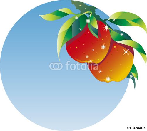 リンゴ、収穫時期
