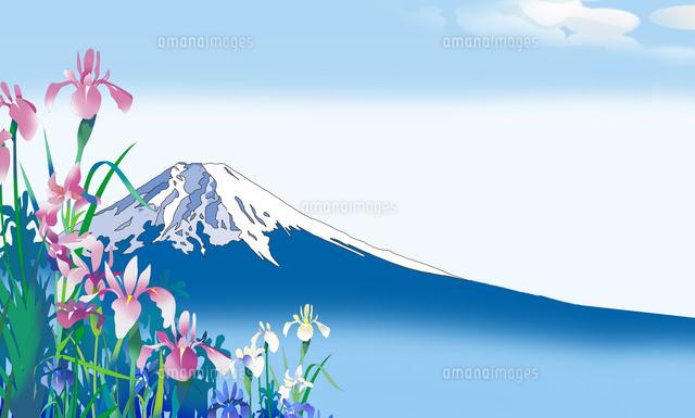 かきつばた、富士山、イラスト、和風イラスト、和風景