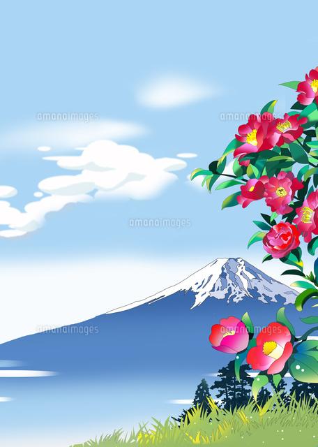 富士山、寒椿、風景イラスト、和風景