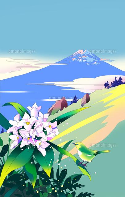 沈丁花、富士山、風景イラスト、イラストレーター、世界遺産、ストックイラスト、花シリーズ