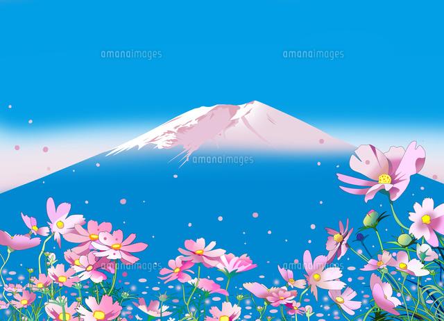 コスモス、和風景、風景イラスト、富士山、秋桜、風景イラスト、カレンダー 秋
