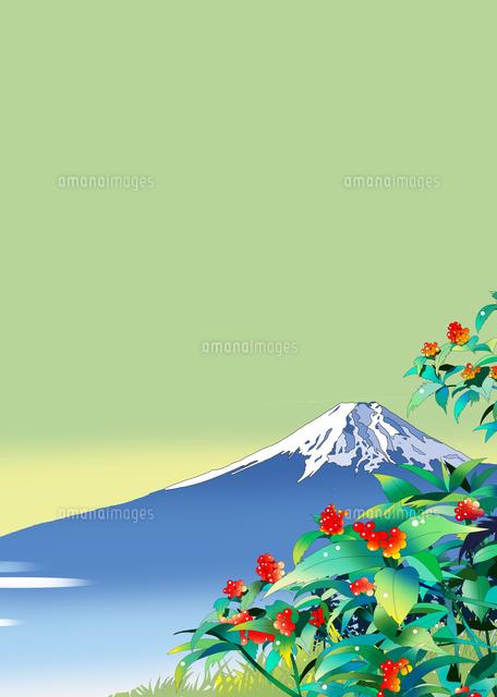 富士山、千両、風景イラスト、和風景、花シリーズ、川野隆司
