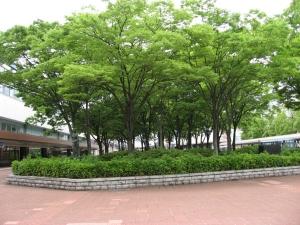 JR鳥取駅前の緑