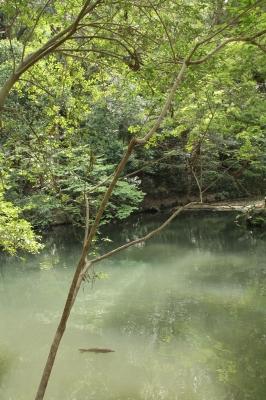 伊勢神宮・外宮の中の池