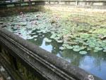 お寺の蓮池