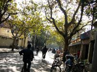 秋らしくなってきた上海