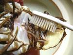 上海蟹の掃除