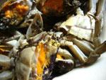 上海蟹を中華包丁でぶった切る