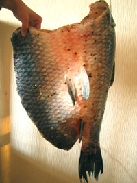 咸魚(青魚)