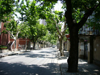 上海の街路樹