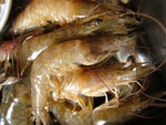 基圍蝦(クルマエビ)