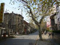上海の冬支度 プラタナスの街路樹の枝打ち