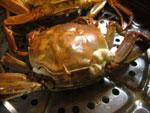 上海蟹を蒸す