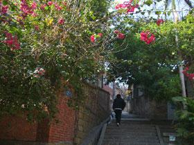 コロンス島の花と階段