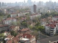 新緑が明るい上海の街路樹