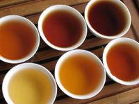プーアル茶5種