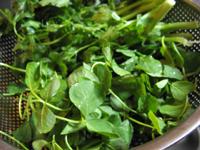 草頭と香菜