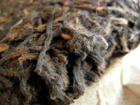 プーアール茶のカビ