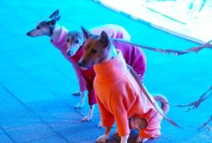 ラグーナ蒲郡dog−1