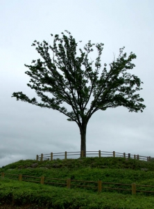 亀山SA−1