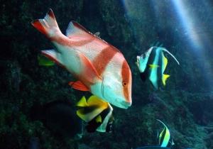 美ら水族館ー4