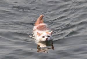 泳ぐ猫ー1