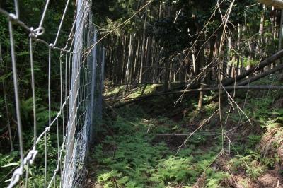 02岩神館背面の土塁と堀.JPG