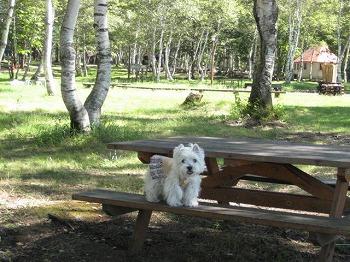 20100910-shizenhanaen-campground-4