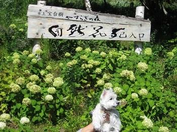 20100910-shizenhanaen-1-1
