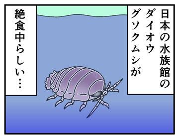 ダイオウグソクムシ絶食中 1